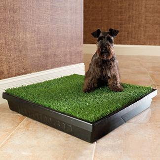 Indoor Dog Potty - Dog Training Equipment | Frontgate