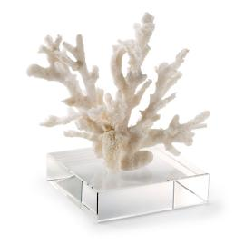 Branching Coral on Riser